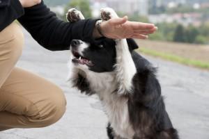 קורס מאלפי כלבים