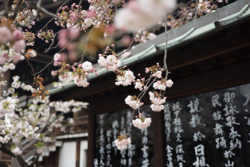 קורס יפנית